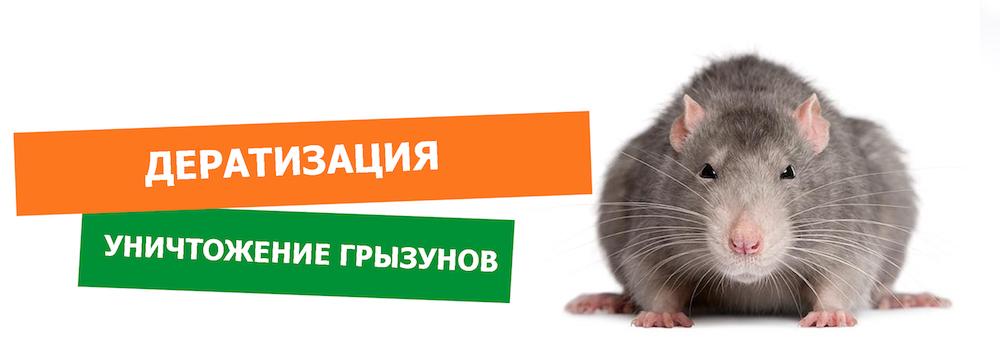 уничтожение крыс в Уфе